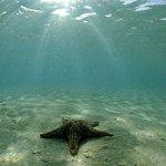 Туристы будут путешествовать под водой
