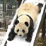 В Гуанчжоу появился ледяной парк для панд