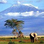 На вершине Килиманджаро нашли загадочную собаку