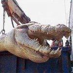 На Филиппинах поймали крокодила гиганта