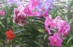 В Таиланде пройдет фестиваль растительной жизни