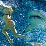 "Дайвер научилась ""заговаривать"" акул"