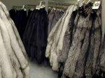 В одном из калифорнийских городов полностью запретили изделия из кожи меха