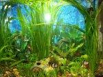 Как завести аквариум с нуля Как завести аквариум с нуля: рыбки и интерьер