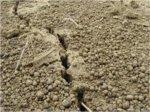 Земля восстановилась после крупнейшего вымирания видов за 10 млн лет