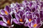 Какие цветы хорошо воздействуют на функционирование мозга?