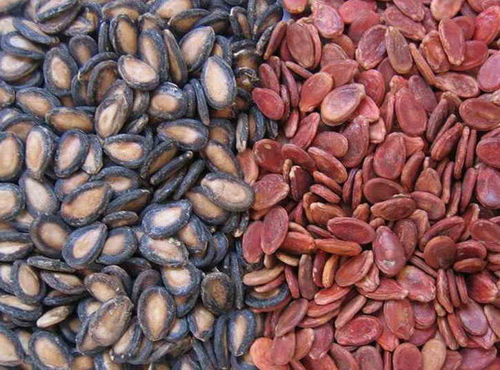Сертифицированные семена арбузов